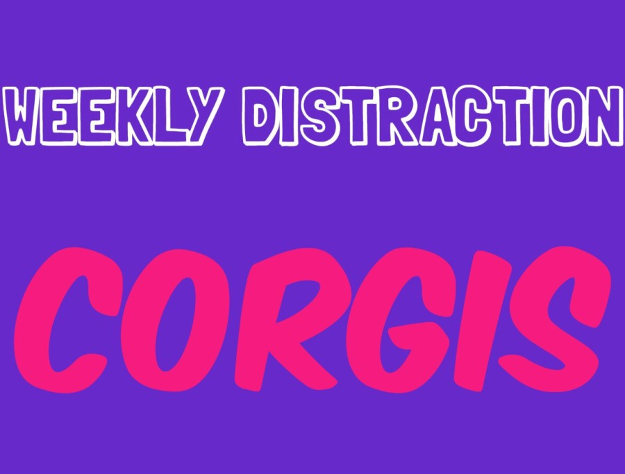 Weekly distraction: 35 corgis to get you through your day