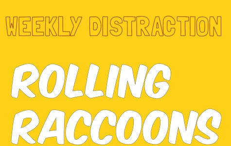 Weekly distraction: a rolling raccoon