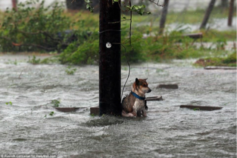 Caring for pets in extreme weather