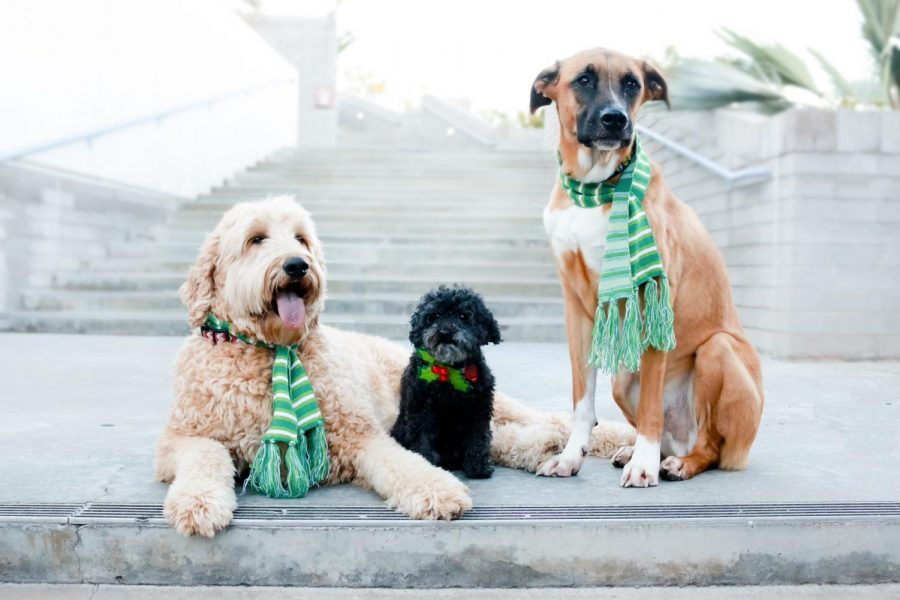 Bruce, Ginger and Winston Richter pose in their fashionable scarves.